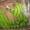 море фруктов почти даром - Изображение #1, Объявление #113982