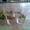 Продам Стаканы из Богемского стекла с наклейками машинок комплект из 6 стаканов.