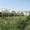24 сот, ,  новые теплицы,  фермы и жилые пом. ,  Сырдарья #1374525