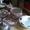 столовый сервиз на шесть персон  #1662254
