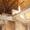 Паркентский 10 соток, Дом коробка, 6 комнат, 235 м. - Изображение #7, Объявление #1697297
