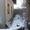 Паркентский 10 соток, Дом коробка, 6 комнат, 235 м. - Изображение #5, Объявление #1697297