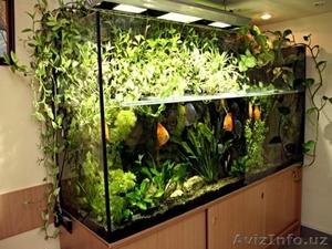 Очистка аквариума. - Изображение #3, Объявление #1598966