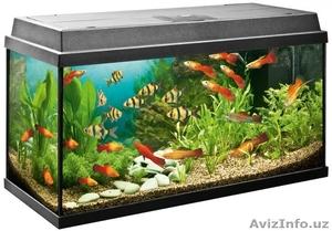 Очистка аквариума. - Изображение #1, Объявление #1598966