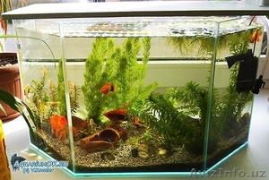 Очистка аквариума. - Изображение #2, Объявление #1598966