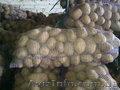 Продам картофель с Украины
