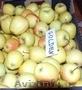 Продам яблоки.Польша