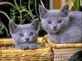 Гостиница для кошек(передержка )