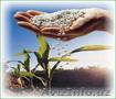 Карбамид, селитра (минудобрения), NPK по Украине и на экспорт., Объявление #1246198
