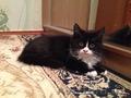 отдам прелестного и ласкового котенка в заботливые руки!!!