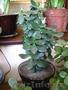 Продаю комнатные растения в ассортименте