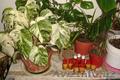 Продаю комнатные растения ! Удобрения,  Подкормка для цветов