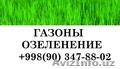 Газоны,  газон,  газоны в Ташкенте,  газоны Узбекистан,  рулонный газон,  Ташкент,