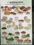 Линию Corali для производства евро-тары, эко-упаковки (Италия)  - Изображение #4, Объявление #1582175