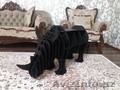 полка-столик носорог - Изображение #3, Объявление #1587157