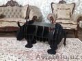 полка-столик носорог - Изображение #2, Объявление #1587157