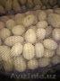 Оптовые поставки картофеля по доступным ценам