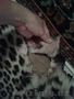 Шкура Леопарда - Изображение #3, Объявление #1601285