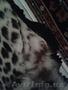 Шкура Леопарда - Изображение #4, Объявление #1601285
