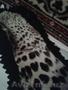 Шкура Леопарда - Изображение #6, Объявление #1601285