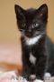 Отдам ласкового котенка, Объявление #1602881
