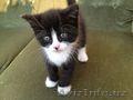 Отдам ласкового котенка - Изображение #2, Объявление #1602881