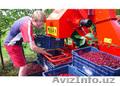 Стряхивающий и очищающий агрегат для уборки вишни и слив MAJA
