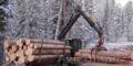 Качественный лес из регионов Дальнего Востока России - Изображение #5, Объявление #1605442