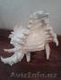 Морская раковина - Изображение #2, Объявление #1600780