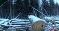 Качественный лес из регионов Дальнего Востока России, Объявление #1605442
