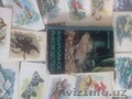 аквариум для рыб, черепах, хомяков и тд  - Изображение #2, Объявление #1634226